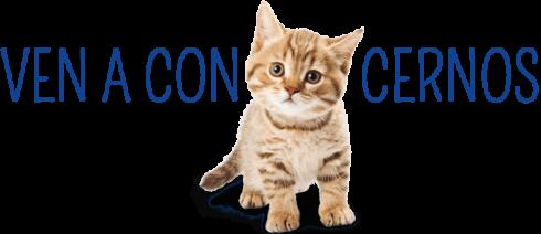 gato-clinica-gatcan