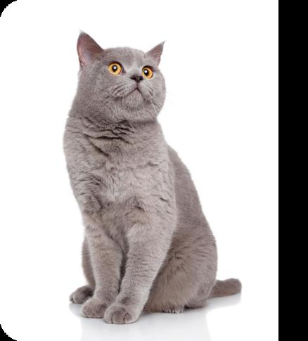 gato formulario-gatcan