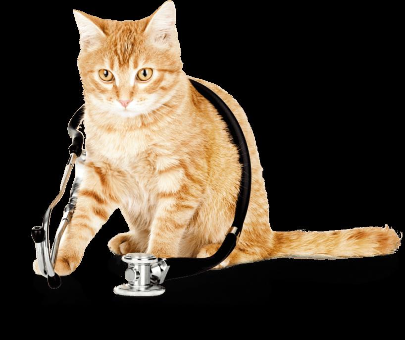 gato servicios-gatcan