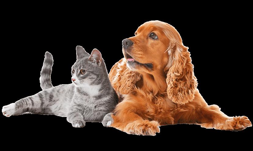 mascotas-campañas-gatcan