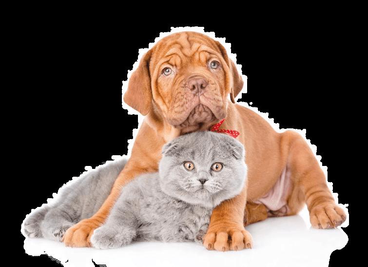 mascotas-gatcan